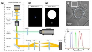 OPTICAL EXCITATION AND DETECTION OF NEURONAL ACTIVITY