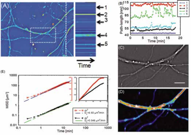 SLIM tracks particle transport in hippocampal neural networks