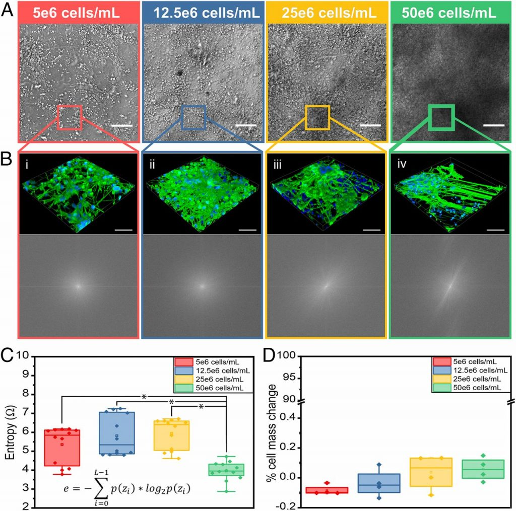 GLIM imaging of in-vitro neural tissue mimic
